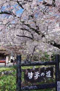 2014京都花見05