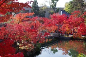 2014京都紅葉狩り20