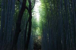 2013京都紅葉狩り07