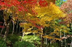 2014京都紅葉狩り05