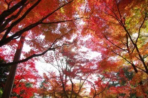 2014京都紅葉狩り04