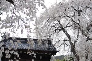 2013長野光林寺、八幡原史跡、小諸懐古園01