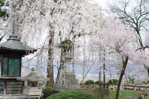 2013長野光林寺、八幡原史跡、小諸懐古園02