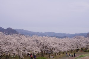 2013長野光林寺、八幡原史跡、小諸懐古園08