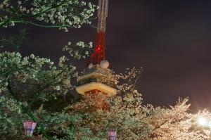 2013八幡山公園夜桜04