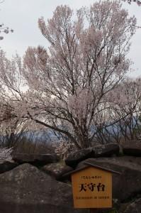 2013長野光林寺、八幡原史跡、小諸懐古園11