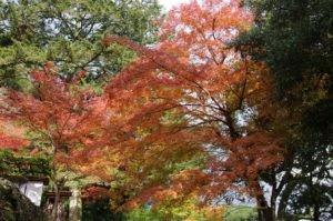 2012京都旅行二日目09