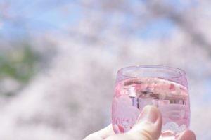 2012八幡山公園花見04