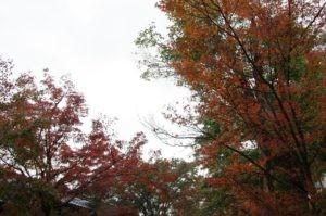 2012京都旅行初日03