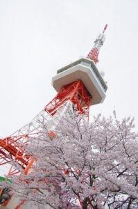 2012八幡山公園花見01