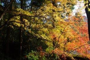 2012京都旅行二日目03